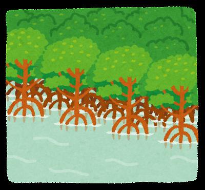 マングローブ林・湿地帯のイラスト