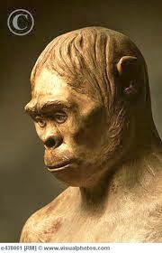 Manusia Purba Pithecanthropus Mojokertensis : manusia, purba, pithecanthropus, mojokertensis, Facts, About, World:, Manusia, Purba, Indonesia