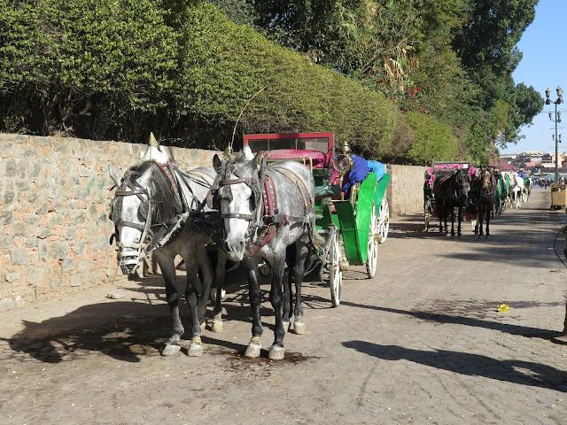 Coches de caballos en Marrakech