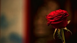 One Red Rose for a Romantic Gesture