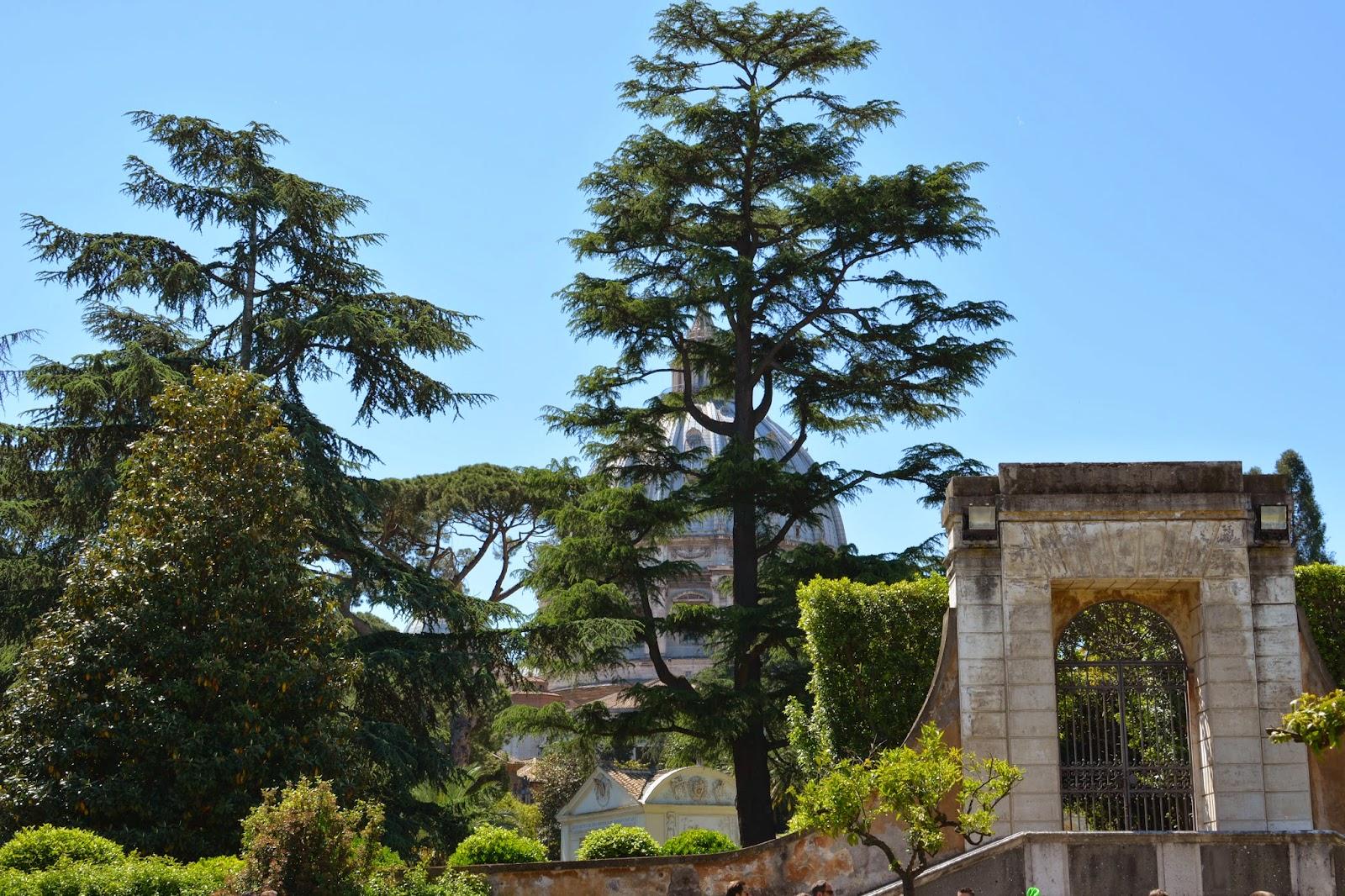 St Peter's Basilica from Vatican Museum garden