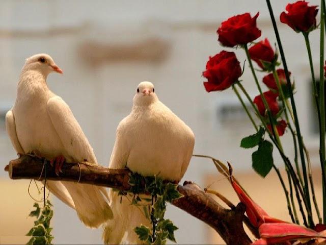 Γιατί οἱ προγαμιαῖες σχέσεις, ὁ πολιτικός γάμος  καί ὁποιαδήποτε ἄλλη συμβίωση  εἶναι θανάσιμα ἁμαρτήματα;