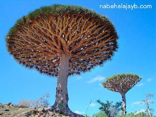 أغرب 10 أشجار في العالم