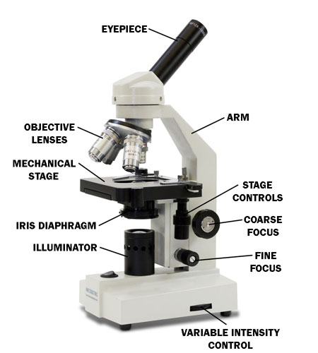 Microscope diagram with name edusip microscope diagram with name 1 main tube inclined head 2 body tube prism inclined head 3 revolving nosepiece 4 objective 5 stage mechanical stage ccuart Image collections