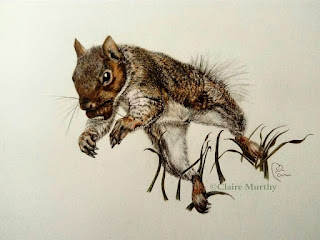 coloured pencils squirrel