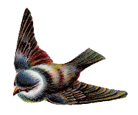 flying bird image animal illustration design clipart stock