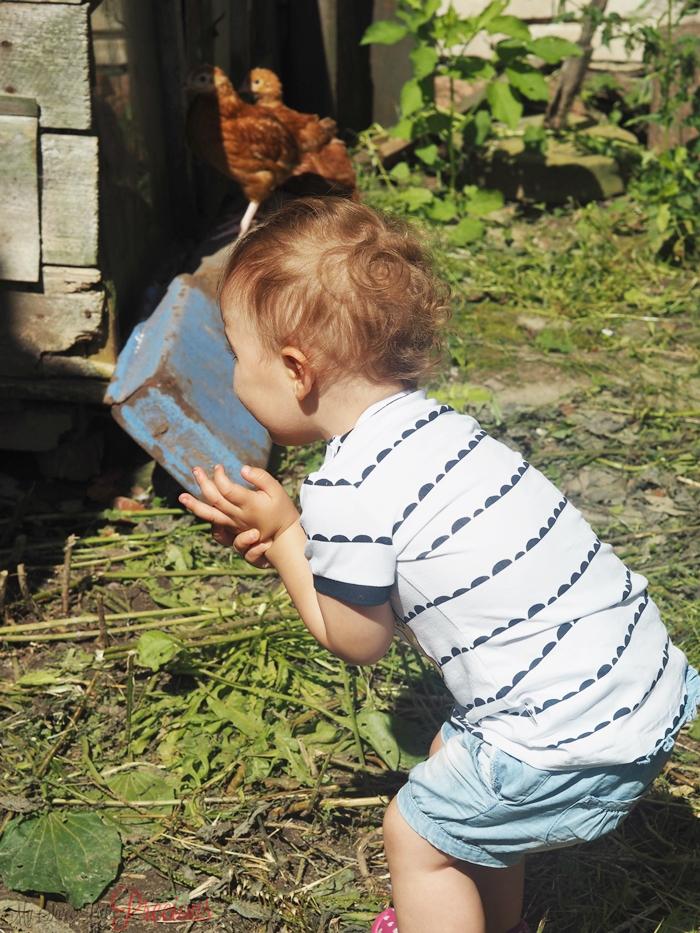 dziecko i kury