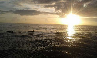 FULL DAY BALI DOLPHIN TOUR