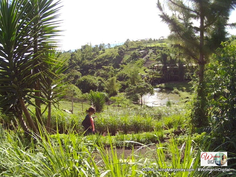 Organic Herbs at Alomah's Place Organic Farm in Bukidnon