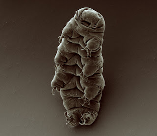 9 Unknown & Interesting Facts About Tardigrade