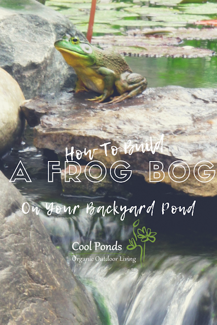 how to build a frog bog