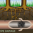 Newman Plumbing Services Melbourne: Tree root intrusion into sewer drains and how to stop it.