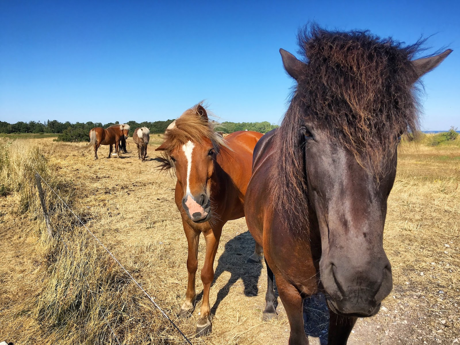 Heste (DE), DE