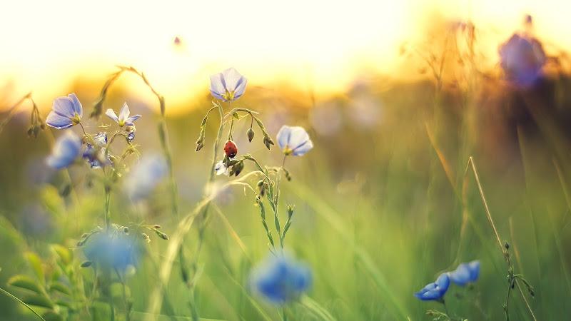 Ladybird in Nature