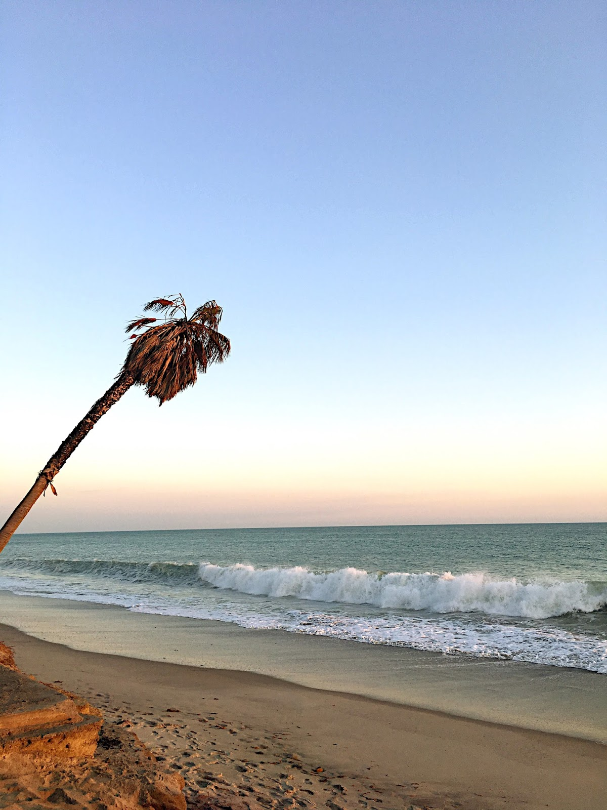 Palm Tree on the beach, Single Palm Tree