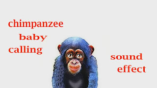 learn chimpanzee sounds