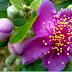 Những đồi hoa sim tím ở gần Hà Nội