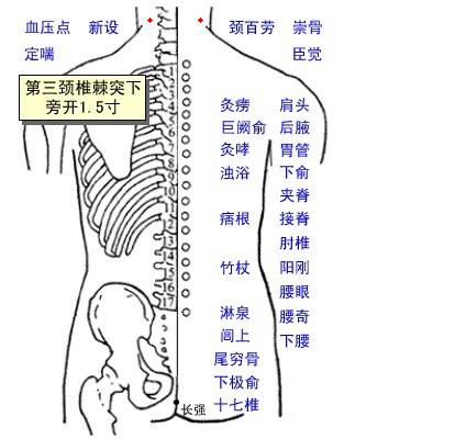 新設穴位   新設穴痛位置 - 穴道按摩經絡圖解   Source:zhongyibaike.com