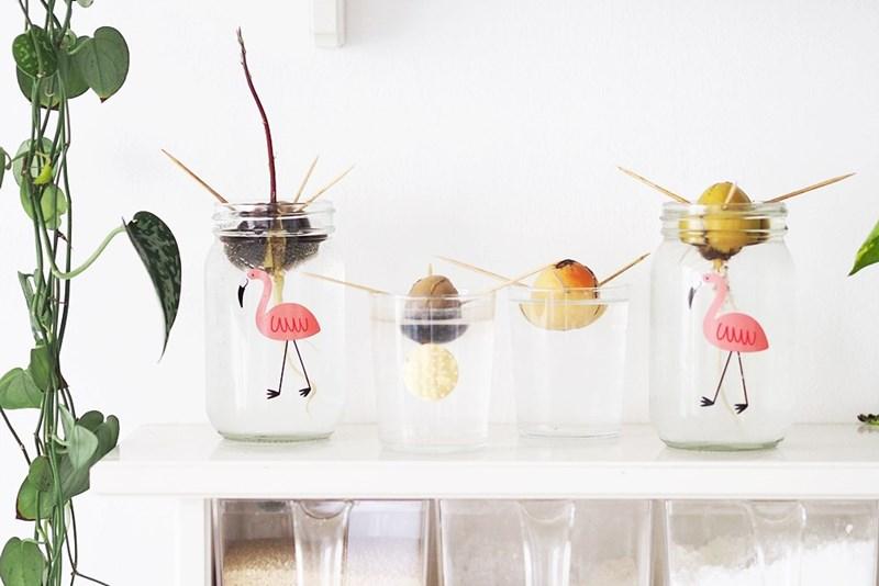 magnoliaelectric einen avocadokern ziehen teil 1. Black Bedroom Furniture Sets. Home Design Ideas