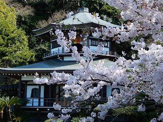 大聖閣と桜