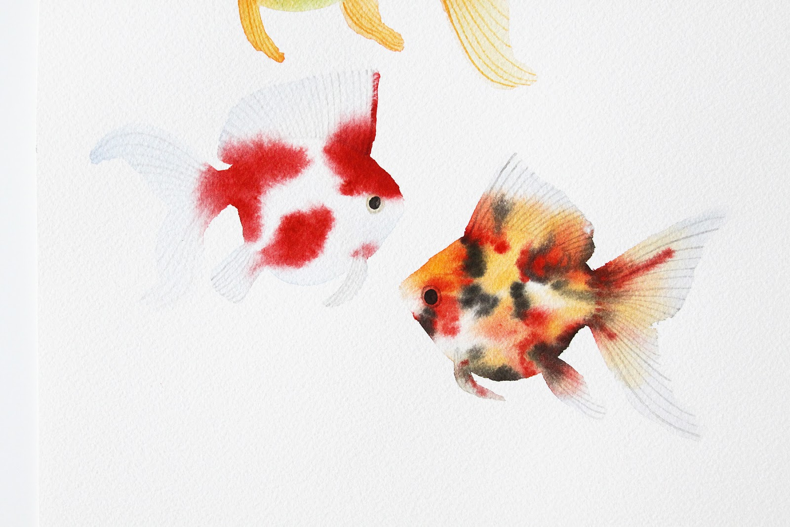 goldfish include Since the orients first developed goldfish from carp, these fascinating fish have expanded to include a variety of colors, shapes, and sizes some common goldfish types are even bred to develop special characteristics.