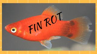 fin-rot-start