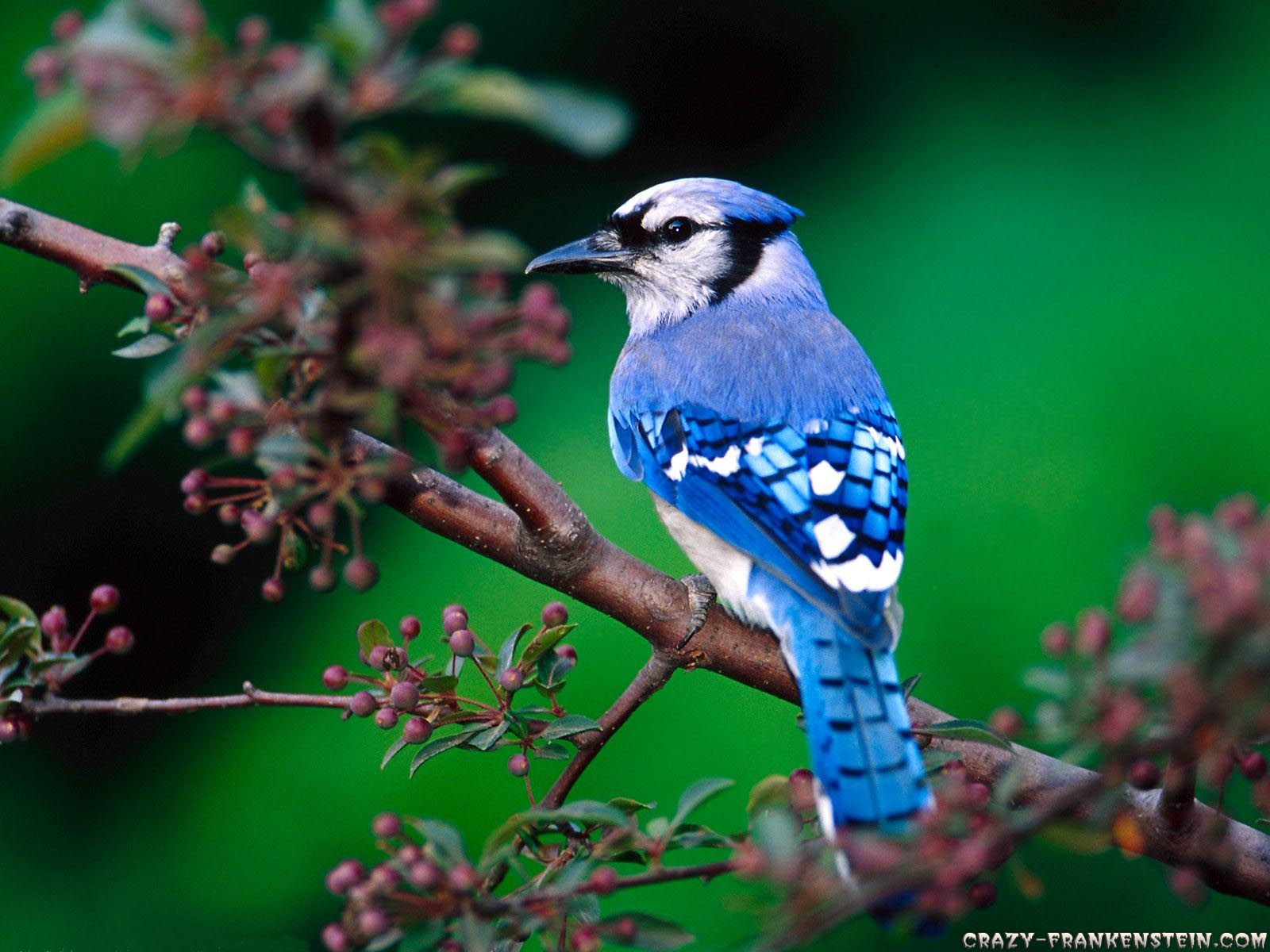 Life Is Better With A Cute Outfit Beautiful Birds Wallpapers