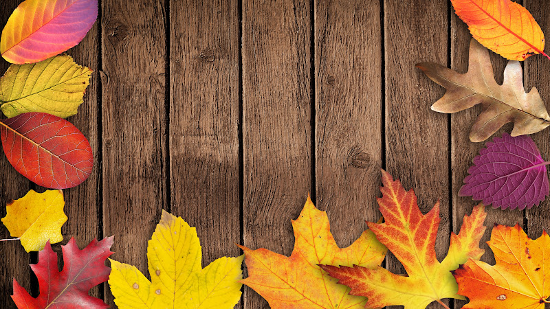 Autumn Leaves HD