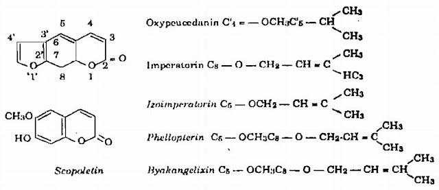 Cấu trúc hóa học Bạch Chỉ - Angelica anomala - Nguyên liệu làm thuốc Chữa Cảm Sốt