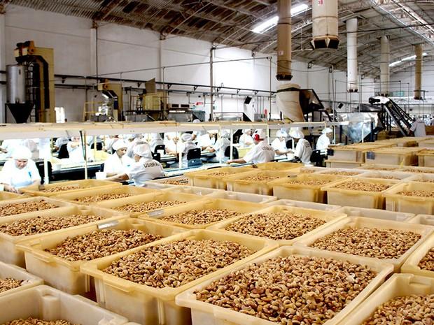 Sape assina contrato para produção de 450 mil mudas de cajueiro no RN