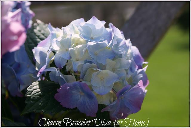 purple white hydrangea plant care floral arrangement galvanized tub wire basket