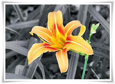 Mom's Lily Flower Photograhy