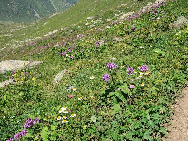 Kaçkar çiçekleri