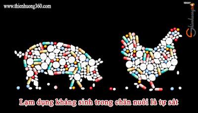 Xin đừng giết hại động vật: Ăn uống khổ độc