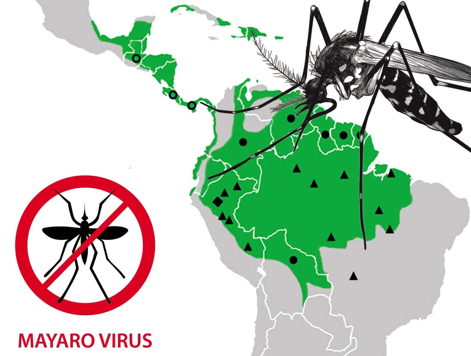 Resultado de imagen para Qué es el virus Mayaro, que también se transmite por el mosquito Aedes aegypti
