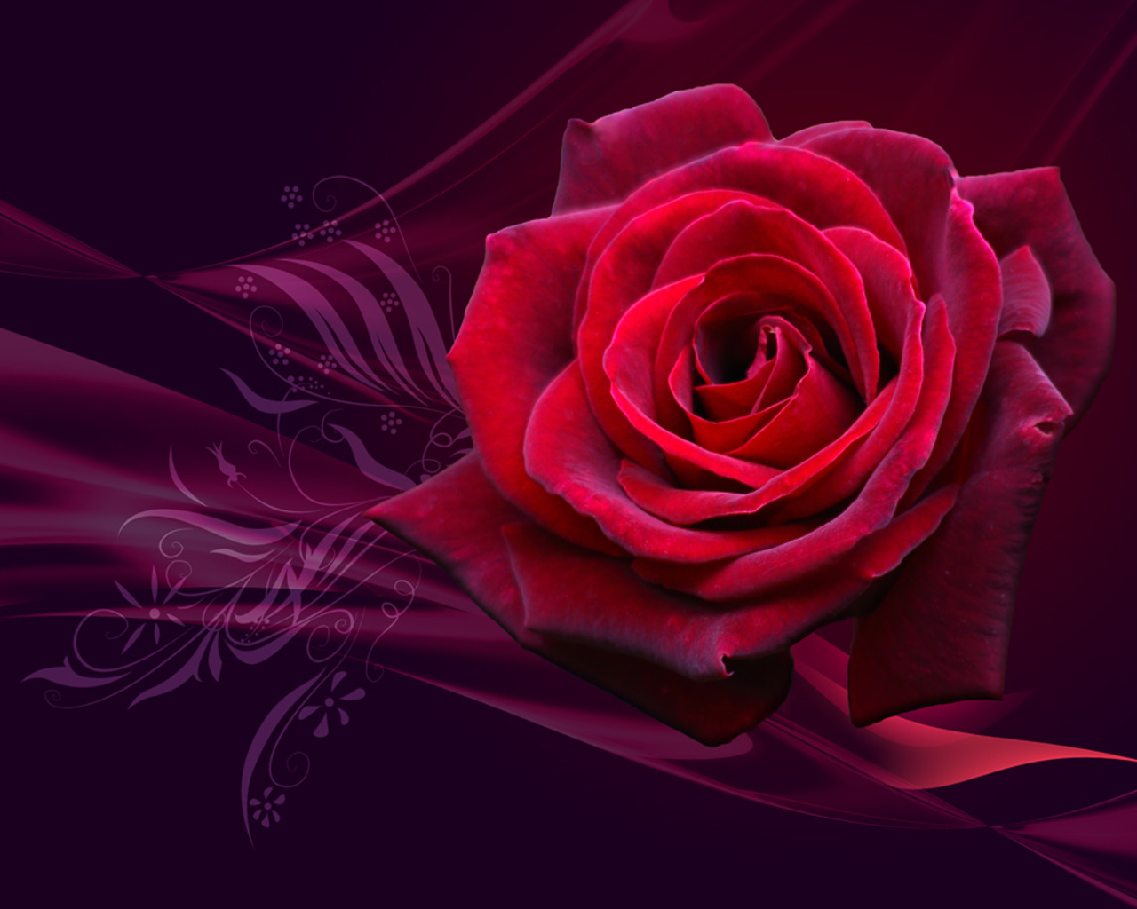 red roses wallpapers - photo #6