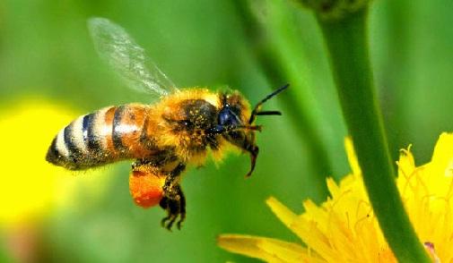 Berguru pada lebah