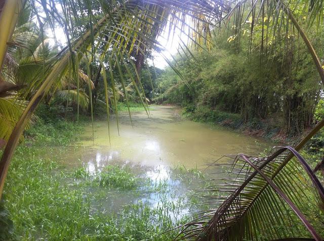 Bán đất vườn trái cây chính chủ tại Phường Bảo Vinh, thị xã Long Khánh 02