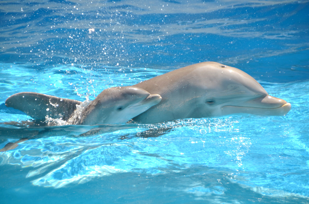images of baby dolphins - photo #8