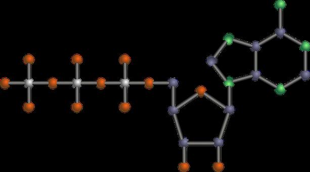 Mata Uang Energi: ATP (Adenosine Tripospat) Farda Zahroh Dinafil Ardilla