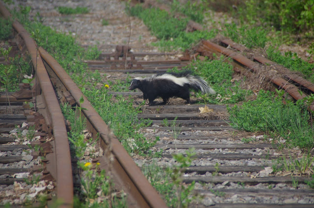 Wonderful Sightings of Mammals in Urban Areas