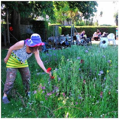 BugCycle wildflower meadow