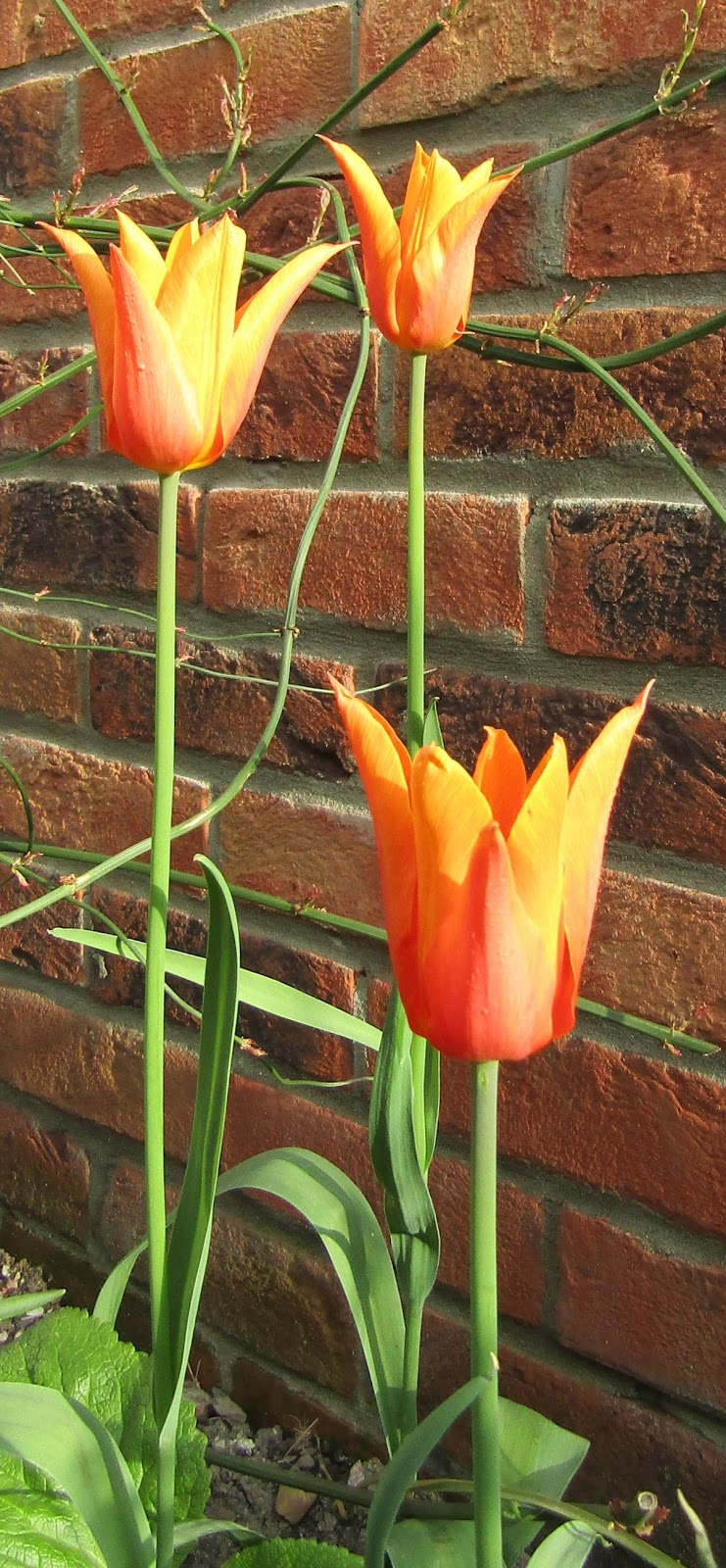 Feltabulous: The Spring Garden - tulip time (part one)