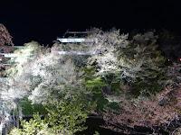 Ueda Castle hanami