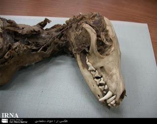 Sekilas Info Tentang Burung (Berita Burung) - INTERMEZO : Ditemukan Bangkai Burung yang Misterius di Iran