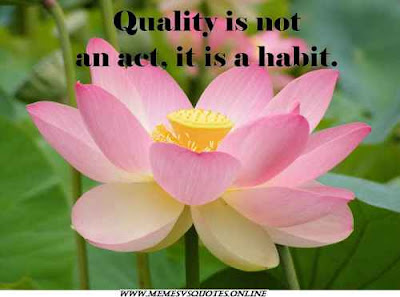 Quality is a habit