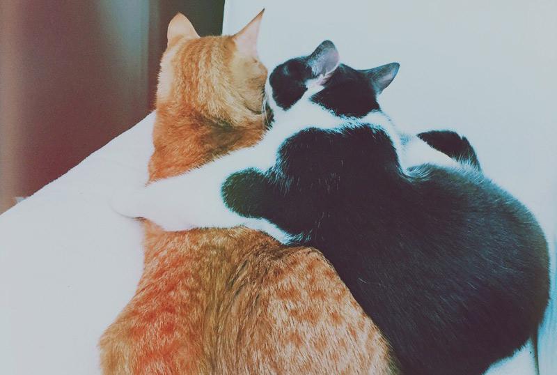 KuneCoco • Schnurrberts Jubiläum • Rauferei unter Katzenbrüdern