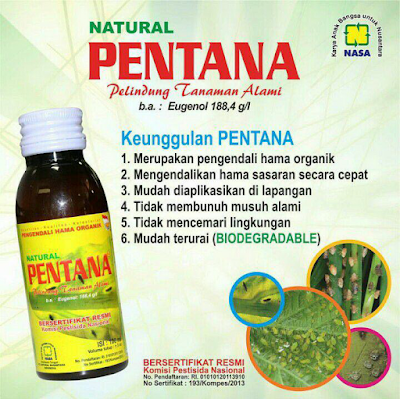 Natural Pentana Nasa