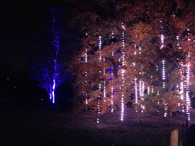 The Tinsel Forest at Illumination at The Morton Arboretum uses lights to capture the idea of tinsel in the trees.