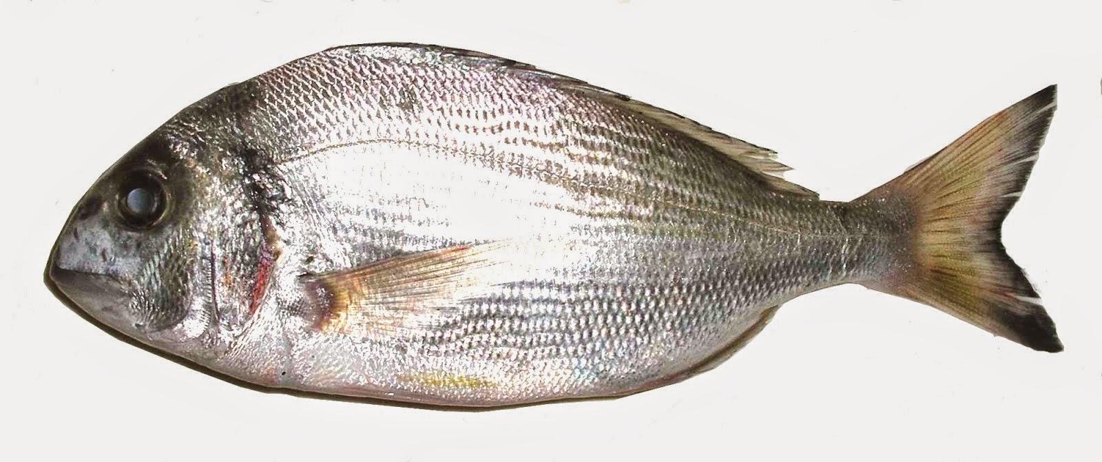 Balık tüylü kebaplar için en iyi tarifi seçme